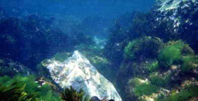 Foto Subacuática
